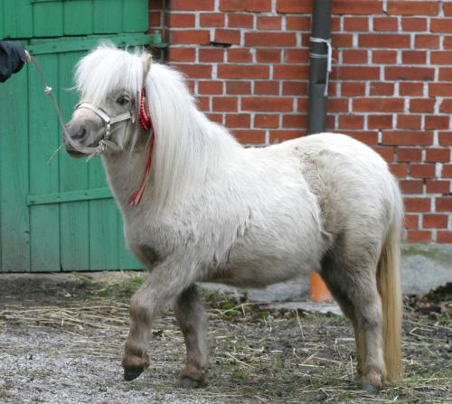 Big picture of Lilja of Northstar 40p Champion