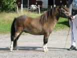 Small picture of Fairyking of Northstar RS 567, 41p Champion,prem G Såld.